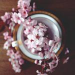 春、桜満開!通販でお取り寄せ 人気の桜スイーツランキング