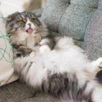 猫砂は通販が便利だニャン!消臭抗菌 匂わない 飛び散らない どれがいいかニャ人気の猫砂ランキング